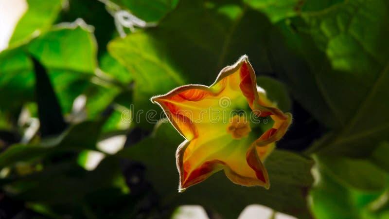 Fasi di crescita e di fioritura Concetto di fioritura immagine stock libera da diritti