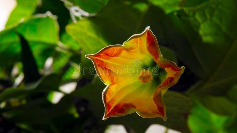 Fasi di crescita e di fioritura Concetto di fioritura fotografie stock