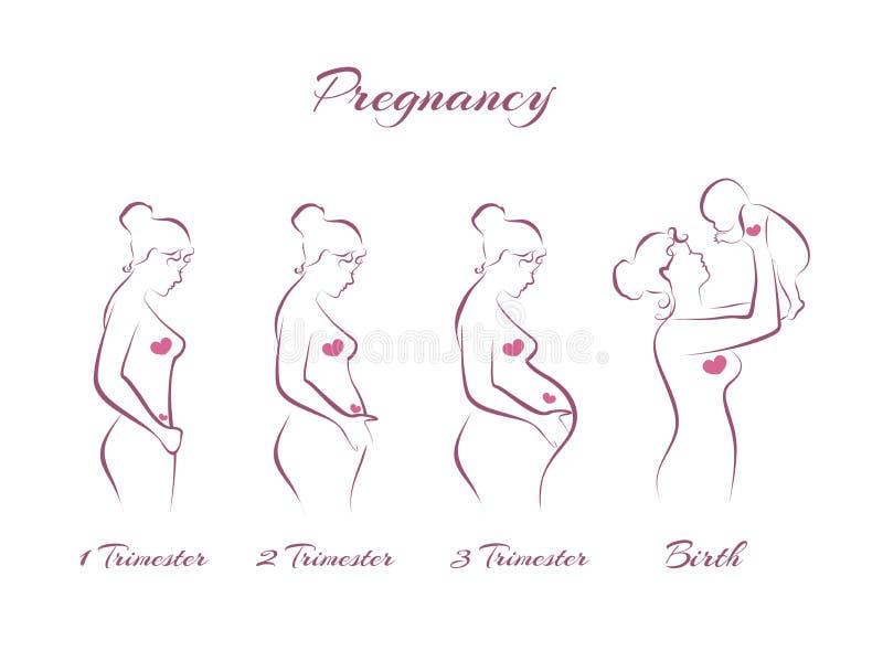 Fasi di gravidanza illustrazione vettoriale