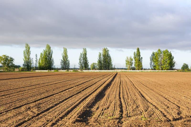 Fasi di iniziale dei campi di mais fotografia stock libera da diritti