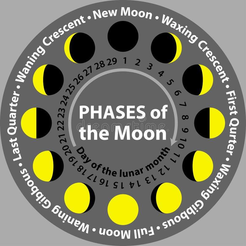 Fasi lunari in un cerchio schema illustrazione vettoriale