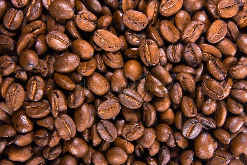 fasola tła kawy zdjęcie royalty free