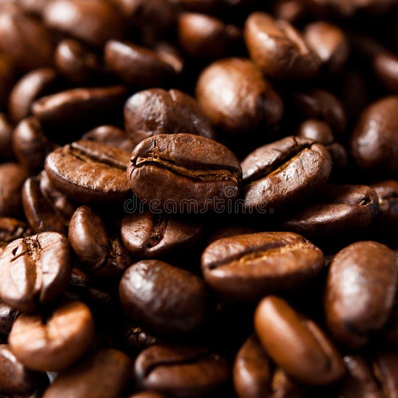 fasole kawowe obraz stock
