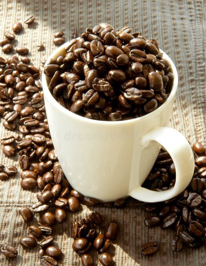 fasoli kawowa francuza pieczeń fotografia royalty free