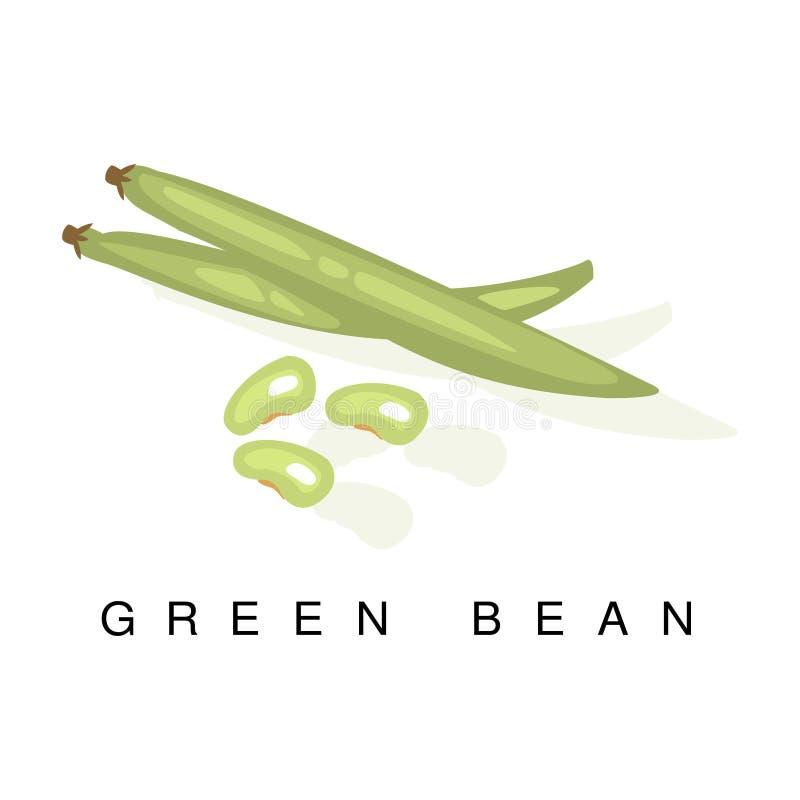 Fasolka Szparagowa strąk, Infographic ilustracja Z Realistyczną pelengów Legumes rośliną I Swój imię, royalty ilustracja