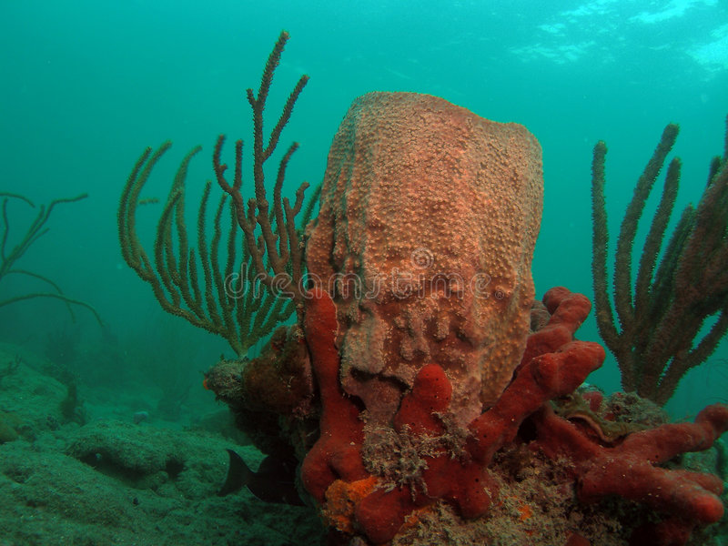 Fass-Koralle und Seeschwamm stockfoto