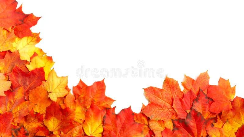 Fassen Sie Rahmen des bunten Herbstlaubs ein, der auf Weiß lokalisiert wird stockbilder