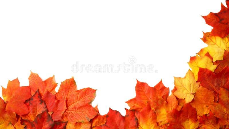 Fassen Sie Rahmen des bunten Herbstlaubs ein, der auf Weiß lokalisiert wird lizenzfreies stockbild