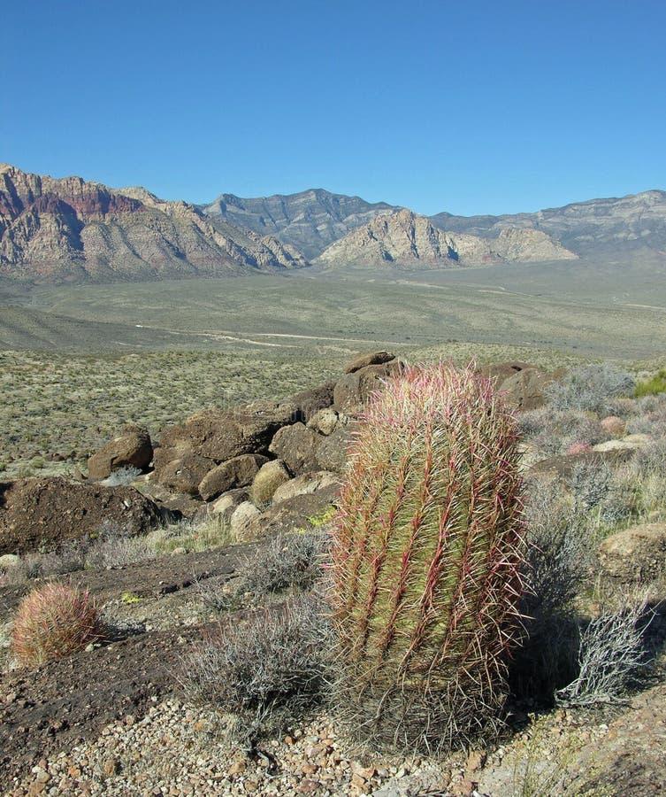 Fasskaktus mit szenischer Ansicht des Teils der roten Felsen-Schlucht nahe Las Vegas, Nevada. lizenzfreies stockfoto