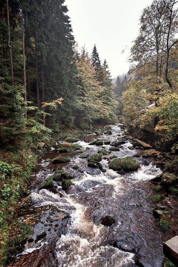 Fast mountain river stream in nature pine Scandinavian mountain forest in evening light. Wet cold rock stones stock photo