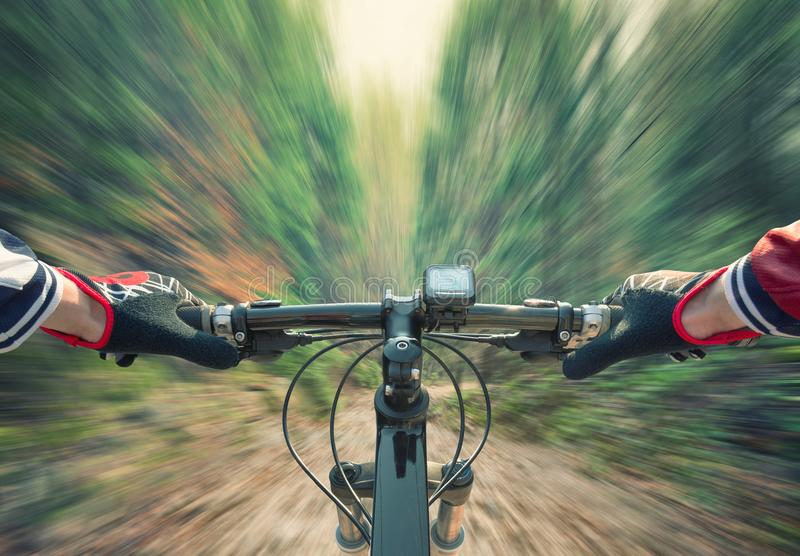 Fast ride in summer forest. royalty free stock images
