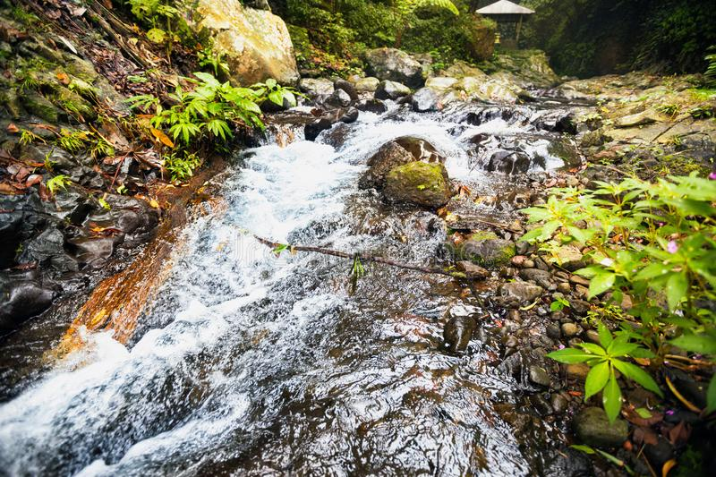 Fast stream nature royalty free stock photo