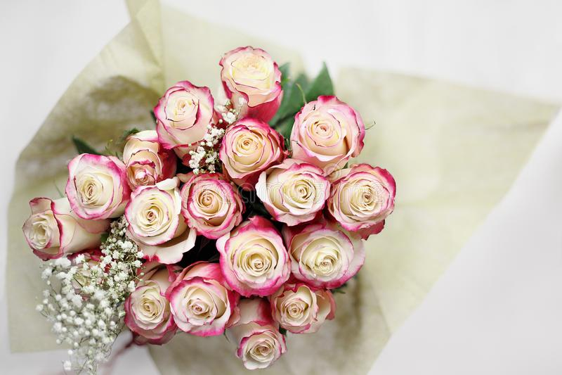 Fast utgift som skjutas av vita rosor för rosa färger och royaltyfria foton