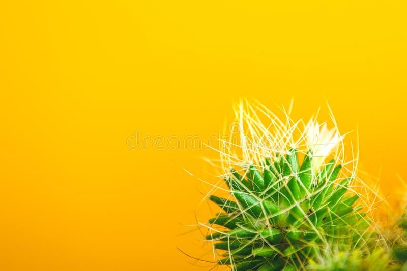 Fastställd design för tropiskt kaktusmode arkivbilder