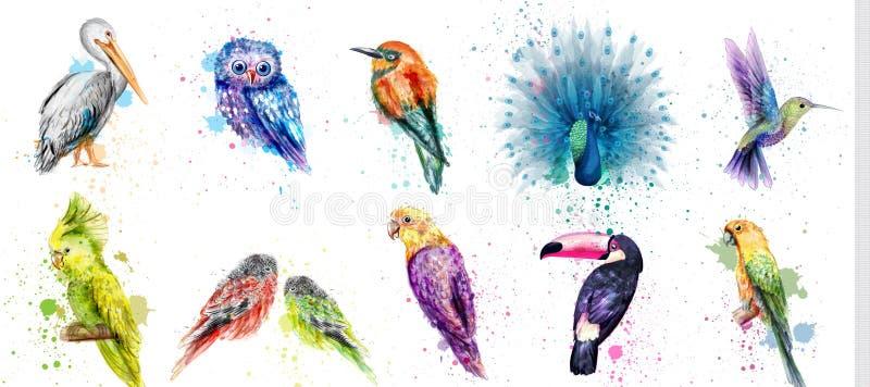 Fastställd vektor för vattenfärgfåglar Påfågel uggla, pelikan, papegoja som gnolar fågelsamlingar royaltyfri fotografi