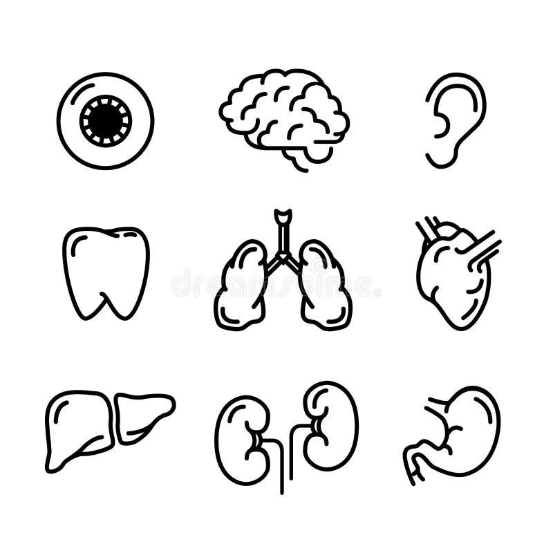 Fastställda svarta översiktssymboler av människaorgan på vit stock illustrationer
