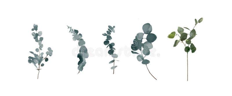 Fastställda vattenfärgbeståndsdelar - örter, blad, blommor samlingsträdgård och lös ört, sidor, filialer, isolerad illust royaltyfri illustrationer