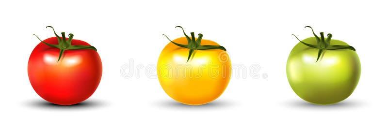 Fastställt realistiskt 3d för tomat som isoleras på vit arkivfoto
