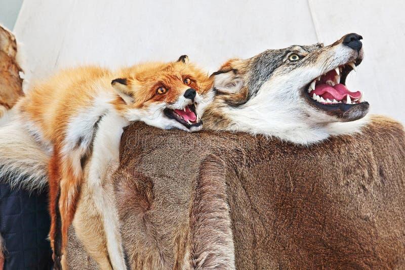 Faszerujący lis i wilk Taksyderma dzikie zwierzęta Futerkowy dywanik zdjęcia stock