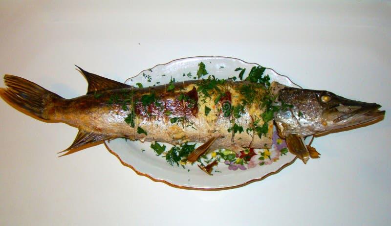 Faszeruję piec szczupak ryba z złotą skorupą fotografia stock