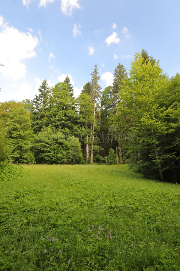 Faszinieren, Großformatarten von grünen Wiesen, Ränder und das Holz alpin die Vorberge in der Sommerzeit stockbild