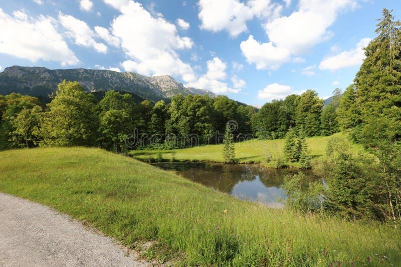 Faszinieren, Großformatarten von grünen Wiesen, Ränder und das Holz alpin die Vorberge in der Sommerzeit lizenzfreie stockfotos