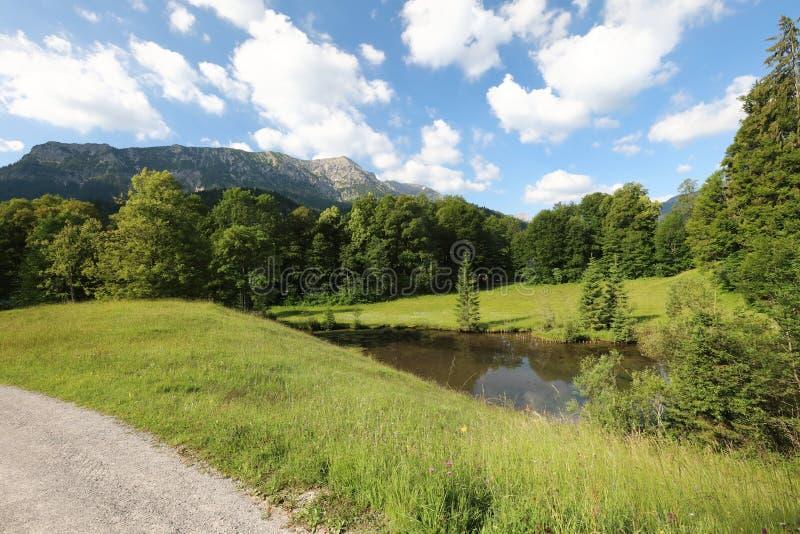 Faszinieren, Großformatarten von grünen Wiesen, Ränder und das Holz alpin die Vorberge in der Sommerzeit lizenzfreies stockfoto