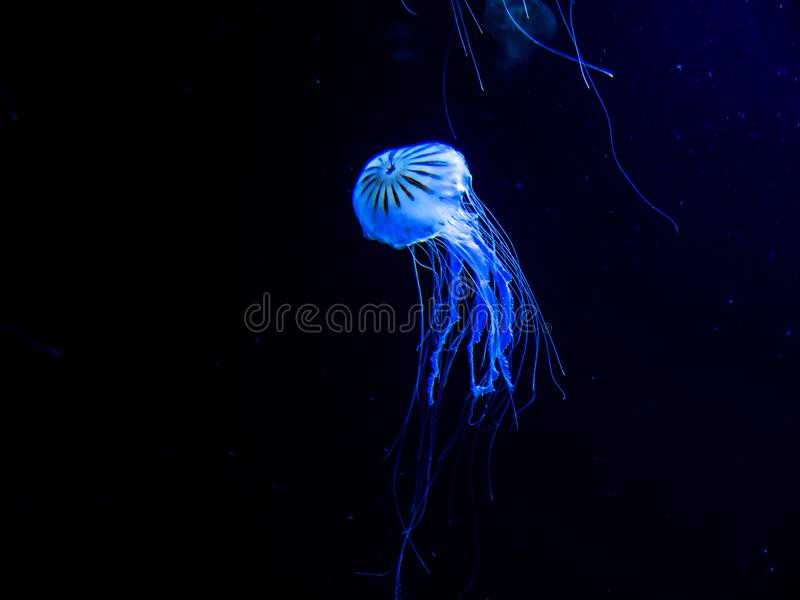 Faszinierende Marine Creatures in einem Aquarium in Berlin Germany stockbild