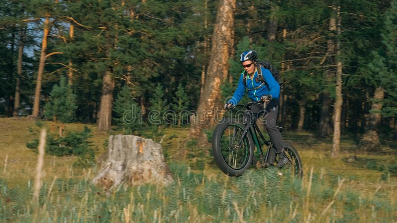 Fat bike also called fatbike or fat-tire bike in summer riding in the forest. The guy rides a bicycle among trees and stumps. He overcomes some obstacles on a royalty free stock photos