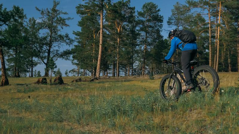 Fat bike also called fatbike or fat-tire bike in summer riding in the forest. The guy rides a bicycle among trees and stumps. He overcomes some obstacles on a royalty free stock image