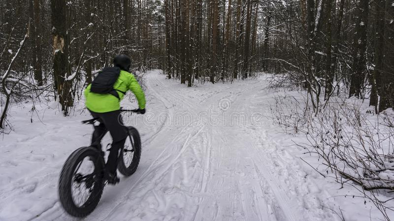 Fat bike also called fat bike or fat-tire bike - Cycling on large wheels in the winter forest. stock photos