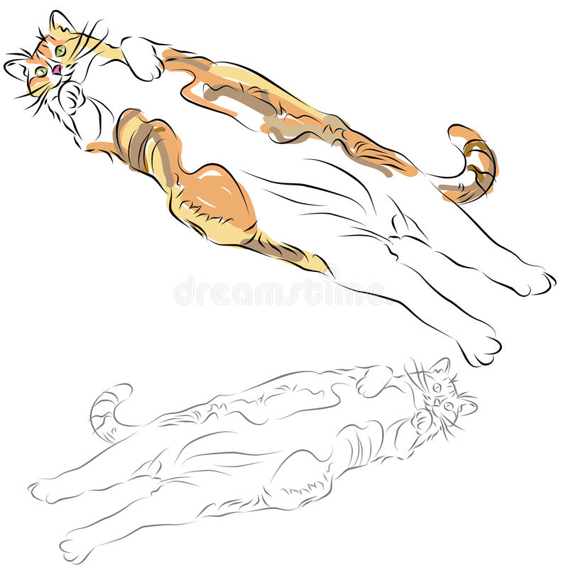 Fat Calico Cat Laying Down. An image of a fat calico cat laying belly up line drawing vector illustration