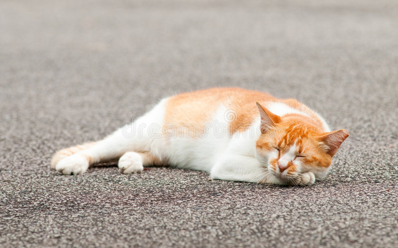 Fat Cat. Fat sleeping nonchalant cat sleeping in the middle of an empty quiet road stock photo