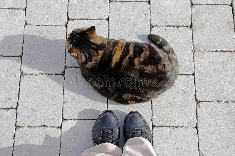 A fat cat lies on the floor in front of a woman`s feet.  stock image