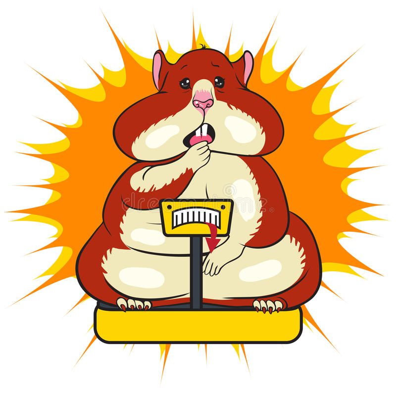Fat funny hamster is standing on the scales. Vector illustration karakatura fat funny hamster with brown spots, surprised muzzle standing on the scales on a stock illustration
