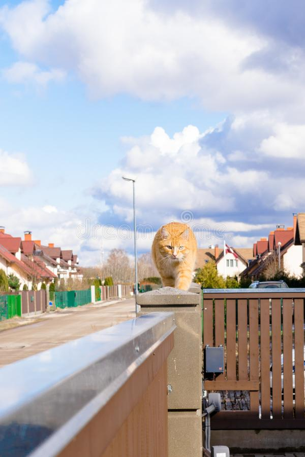 fat red cat is walking on the fencil in beautiful residential sector of row houses in sunny day with blue sky royalty free stock images