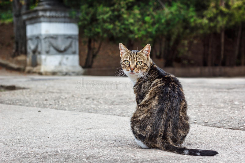 A fat tabby cat sitting on the road looking over shoulder towards camera. A fat lonely tabby cat sitting on the road looking over shoulder towards camera stock photo