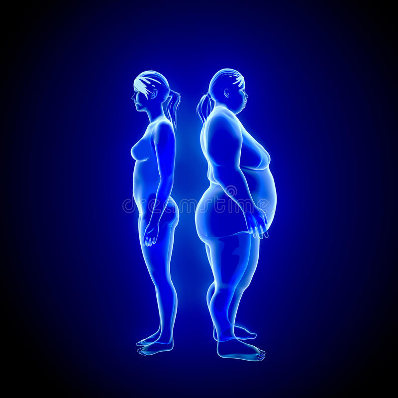 Fat And Thin Woman Stock Illustration