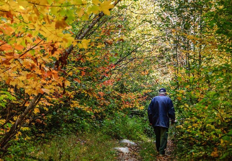 Fatato di autunno con la camminata senior nella foresta fotografia stock libera da diritti