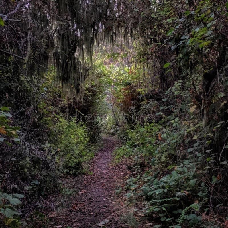 Fatato Fern Trails fotografia stock