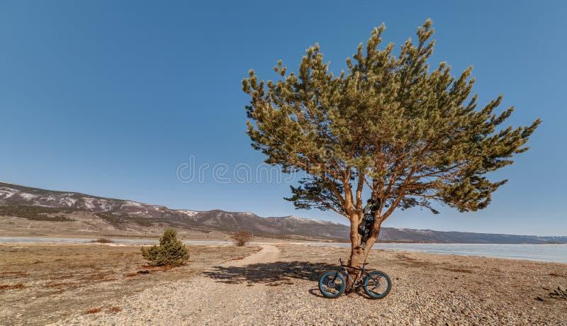 Fatbike. Fat tire bike. stock photos