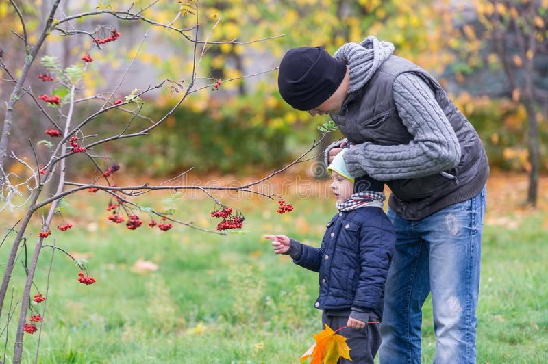 The father cares for the son in the autumn park against the background of a mountain ash branch. The father cares for the little son in the autumn park against royalty free stock image