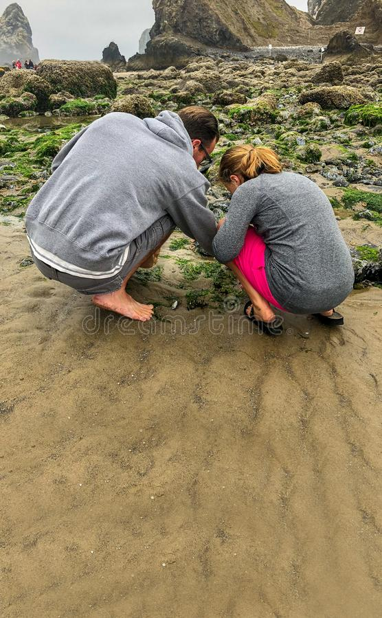 Father and Child Inspect Tide Pool for sea life at the beach stock image