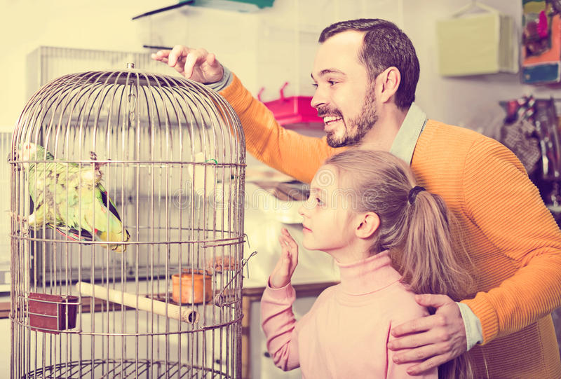 Father and daughter excited to see green parrot in pet shop. Young positive father and daughter excited to see green parrot in pet shop stock photo