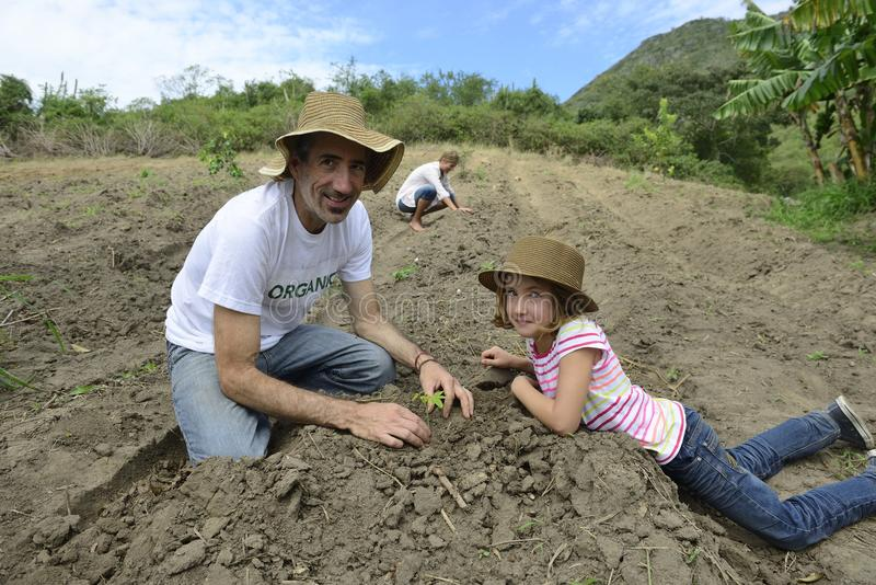 Father and daughzer planting. Organic farming: father and daughter planting stock image