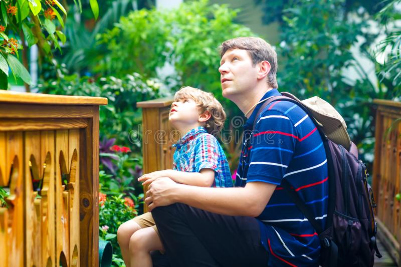 Father and preschool kid boy discovering flowers, plants and butterflies at botanic garden. Family, young man and son stock image