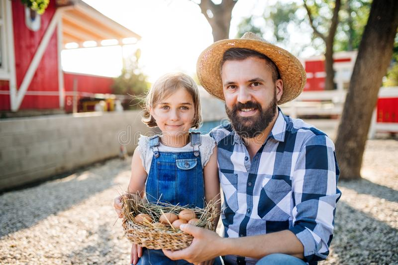 A father with small daughter outdoors on family farm, holding eggs. stock image