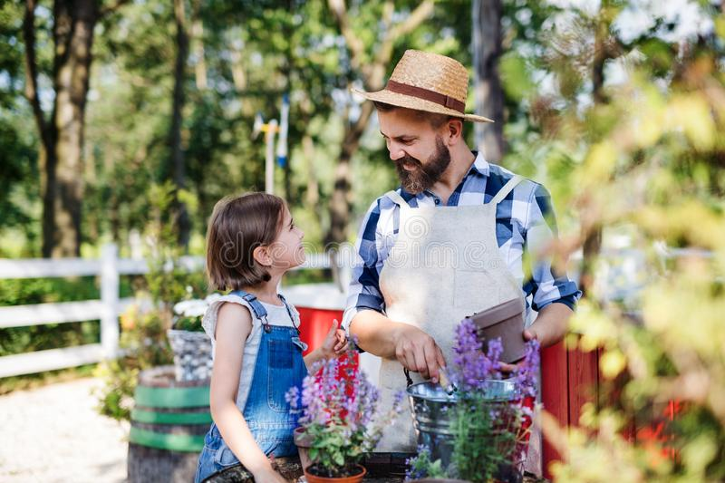 A father with small daughter outdoors on family farm, planting herbs. royalty free stock photos