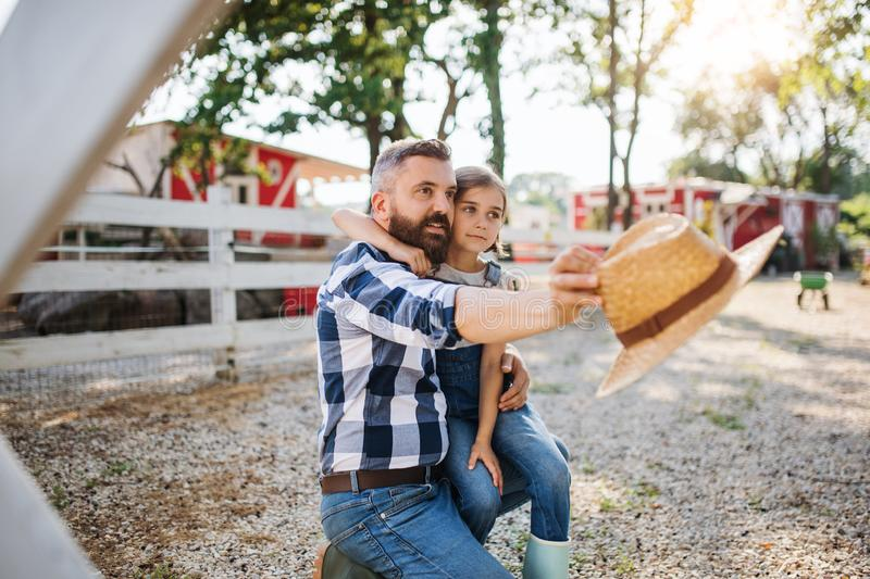 A father with small daughter outdoors on family farm, talking. royalty free stock photography