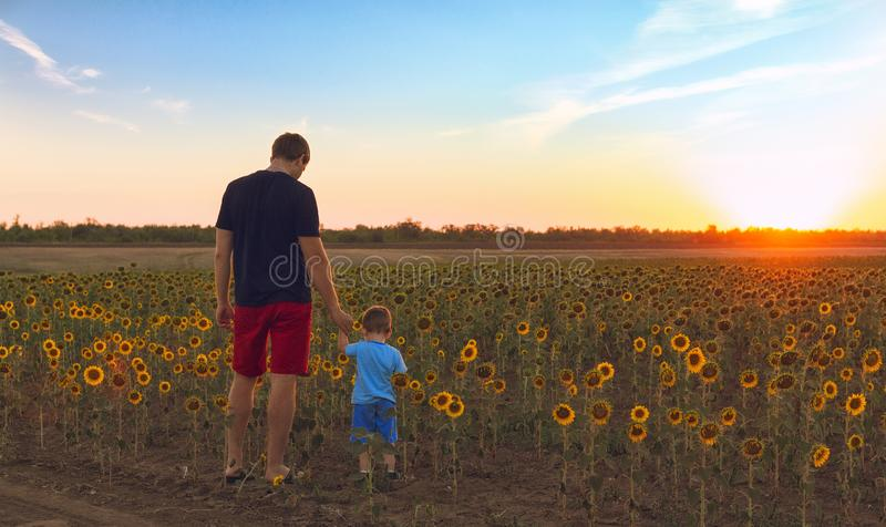 Father and son admire the picturesque sunset in the field with sunflowers. stock photo